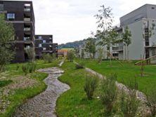 6) Siedlungsbach entlang Gemeindegrenze / 2009